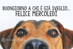 Immagini-buongiorno-mercoledC3AC-divertenti