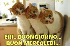 d5vij08obr-ehi-buongiorno-buon-mercoledi-bgiorno-facciabuchini_a