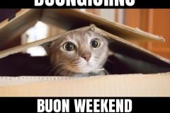 1968773334-buongiorno-buon-weekend-ciao-facciabuco-bestiaccia_a