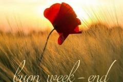 Buongiorno-e-Buon-Weekend-3137