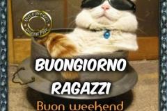 ammawowvbg-gatto-con-gli-occhiali-da-sole-buongiorno-ragazzi-buon-weekend-buongiorno_a