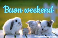 gattino_cane_coniglio_criceto_buon_weekend_1540581199